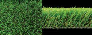 luxury witchgrass