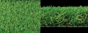 regency witchgrass