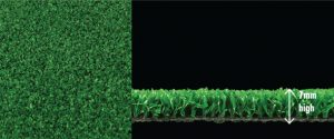 standard-plus-witchgrass